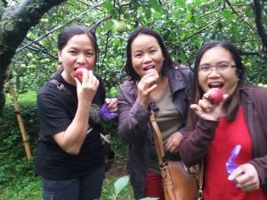 Wisata Petik Apel Kusuma Agrowisata Batu Malang