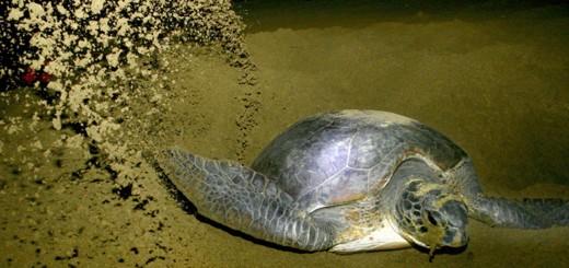 Paket Wisata Kawah Ijen Pantai Sukamade