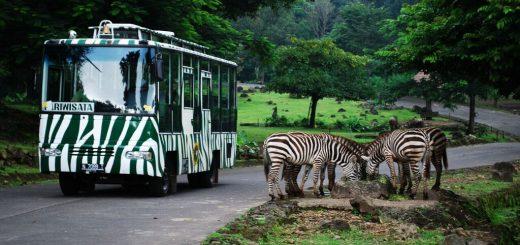 Paket Wisata Taman Safari Prigen Full Day