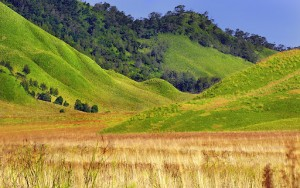 Bukit Savana di Gunung Bromo