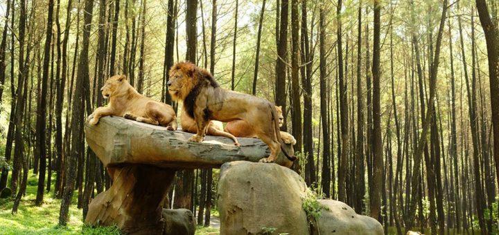 Wisata Taman Safari Prigen Jawa Timur