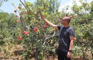 Berwisata di Gunung Bromo sekaligus ke Kebun Apel Pasuruan